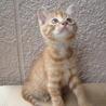 生後2か月のオスの子猫の里親さんになってください。
