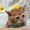 元気いっぱいトラ模様の子猫ちゃん