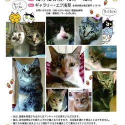 福島の猫の顔見せ会(お見合の会)