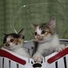 三毛姉妹のアンナとカンナです。