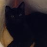 黒猫・目が金色・おっとりチョコッと白パンツ君♪