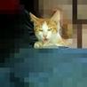 一時保護中の仔猫の里親さん募集中