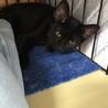 黒ちゃん子猫の黒豆✿女の子7か月 サムネイル2