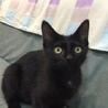 甘えん坊の黒猫ココちゃん♪