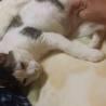 穏やかで大人しい大人猫【小町♀】 サムネイル4