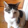 穏やかで大人しい大人猫【小町♀】 サムネイル6