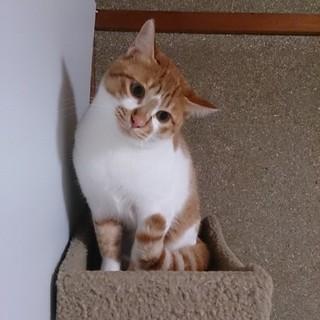 びびりん【マーブル♂】絶賛家猫修行中!