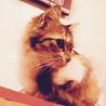 ふさふさシッポの三毛猫さん