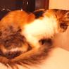 ふさふさシッポの三毛猫さん サムネイル4