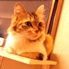 ふさふさシッポの三毛猫さん サムネイル5