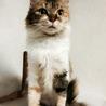 ふさふさシッポの三毛猫さん サムネイル3