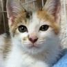 ゴロゴロの甘えっ子の三毛猫!