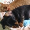 夏に里子になった子猫★優しいお姉さんとワンコで良かったね(^v^)
