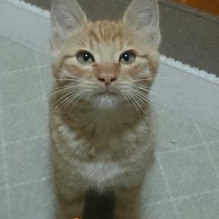 ひとりぼっちで鳴いてた子猫