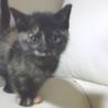 子猫の里親探しています。