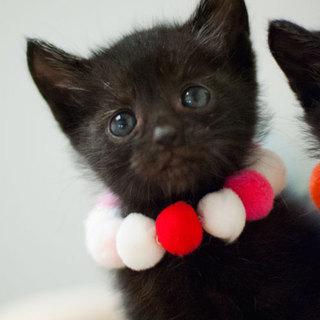 愛らしい黒猫ちゃん(長しっぽ)