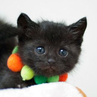 愛らしい黒猫ちゃん(カギしっぽ)