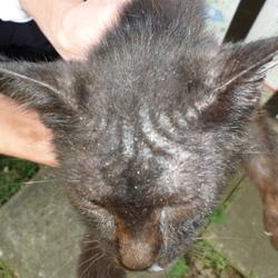皮膚病の野良猫の治療(町田市周辺)