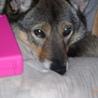 中型以上の大きさの犬の扱いに慣れている方希望 サムネイル2