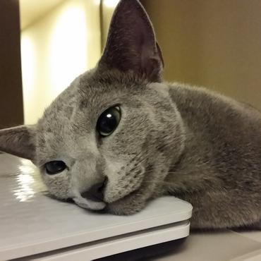 ちょうどいい高さの枕(それはノートPCというのだよ)