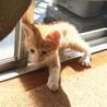 生後1ヶ月半☆トラ猫の男の子 サムネイル2