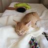 生後1ヶ月半☆トラ猫の男の子 サムネイル4