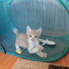 生後1ヶ月半☆トラ猫の男の子 サムネイル5