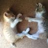 生後1ヶ月半☆トラ猫の男の子 サムネイル7
