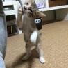 生後1ヶ月半☆三毛猫の女の子 サムネイル7