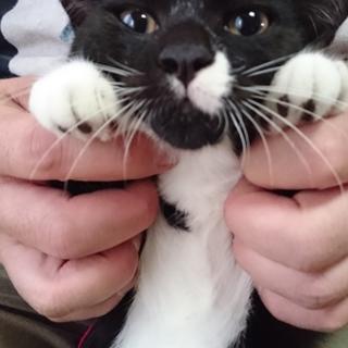 黒いお顔がかわいいノンビリ白黒子猫!