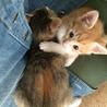 生後1ヶ月半☆トラ猫の男の子 サムネイル6