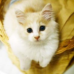 猫の譲渡会 Bootymarket × [sakuraneko]  フリマもやります!