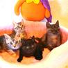 アメショMIX♂♀キジ♀黒縞♂ :2猫ずつ里親様に サムネイル2