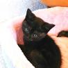 アメショMIX♂♀キジ♀黒縞♂ :2猫ずつ里親様に サムネイル6