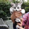 仲良しの母猫と子猫(1匹)の里親さん募集中!仲介
