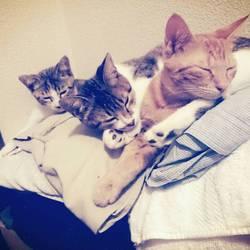 今飼ってる猫たち