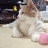 甘えん坊なイケメン猫 サムネイル5