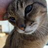 若々しい19歳のオレ様な猫 サムネイル2
