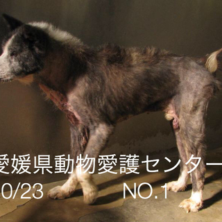 愛媛県動物愛護センターに収容されています。