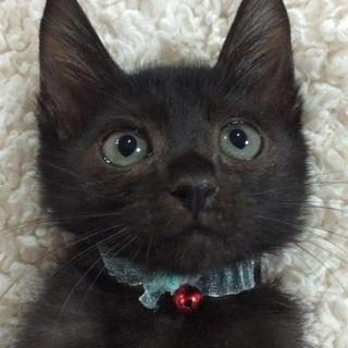 お目目パッチリの美男子黒猫です!
