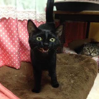 ほたるくん・黒猫♂
