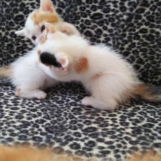 9月30日生まれ、土佐清水市の子猫たち