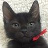 お目目パッチリの美男子黒猫です! サムネイル5
