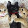 お目目パッチリの美男子黒猫です! サムネイル7
