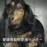 愛媛県動物愛護センターに収容されています!!