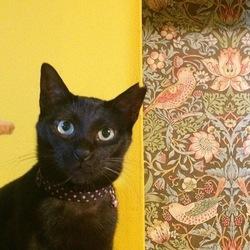 黒猫譲渡会 atネコリパブリック東京 お茶の水