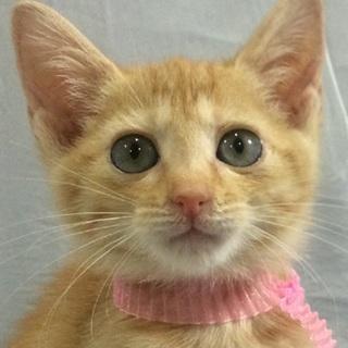 パッチリ瞳の美少女猫です!