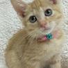 パッチリ瞳の美少女猫です! サムネイル2