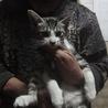 3か月の可愛い子猫です。