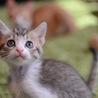 人間大好き、おてんばで甘えん坊の美猫さん♪